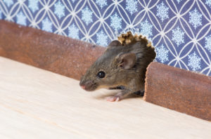 What to Do Against Household Pests?