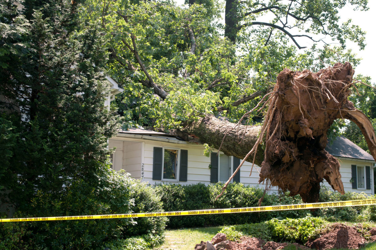 What You Should Know About Fallen Trees and Insurance