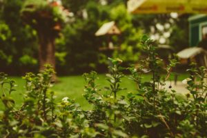 How to Make Your Yard Safe for the Summer
