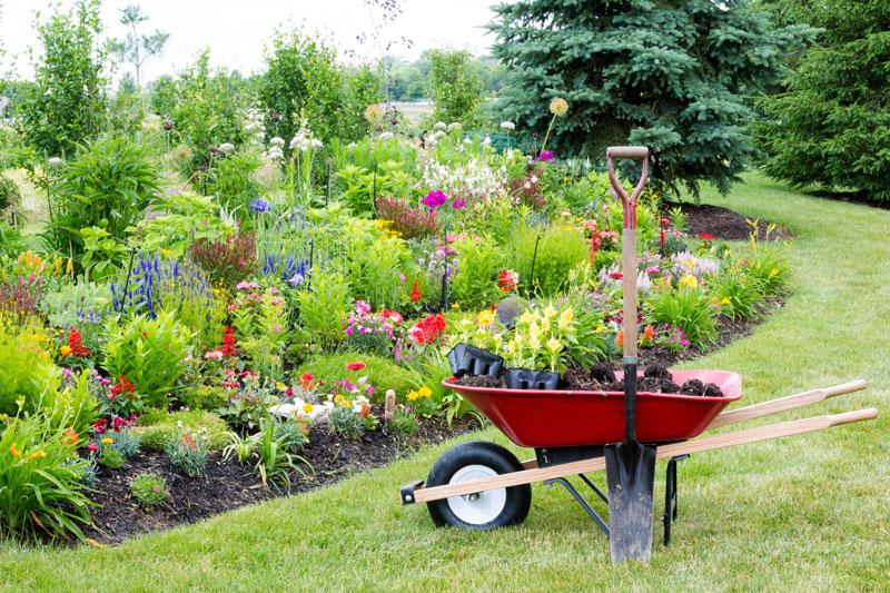 Simple Gardening Tips for Your Garden