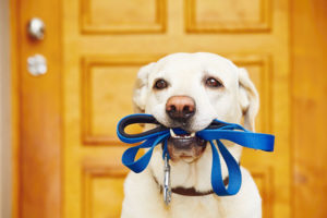 What to Do With Pets in an Emergency Evacuation Situation